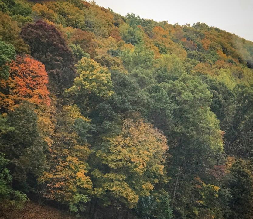 Gratitude, autumn